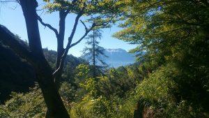 Natur pur. Zwischen den Bäumen kommt das Hohe Brett zum Vorschein.